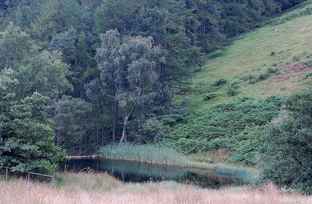 Duck Pond, Hollows Burn