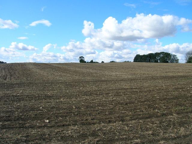 Farmland off Braithwell Road