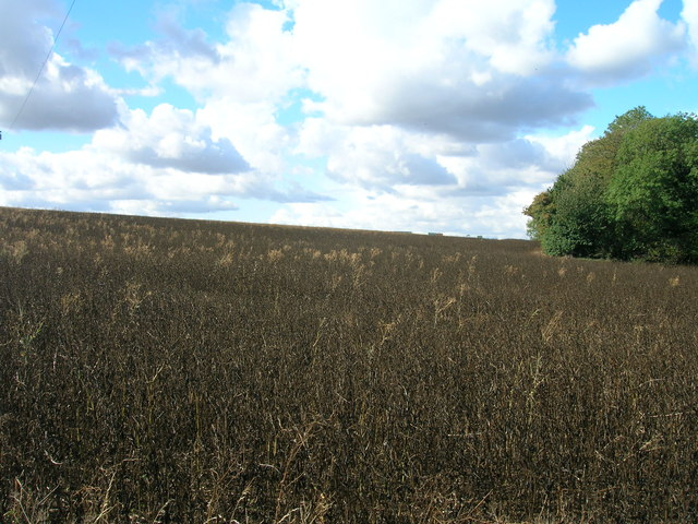 Farmland off Wood Lane