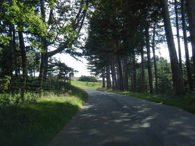 Lyme Park approach drive looking toward The Cage