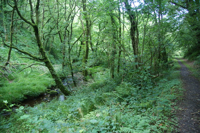 Footpath in Coed Pentrisil
