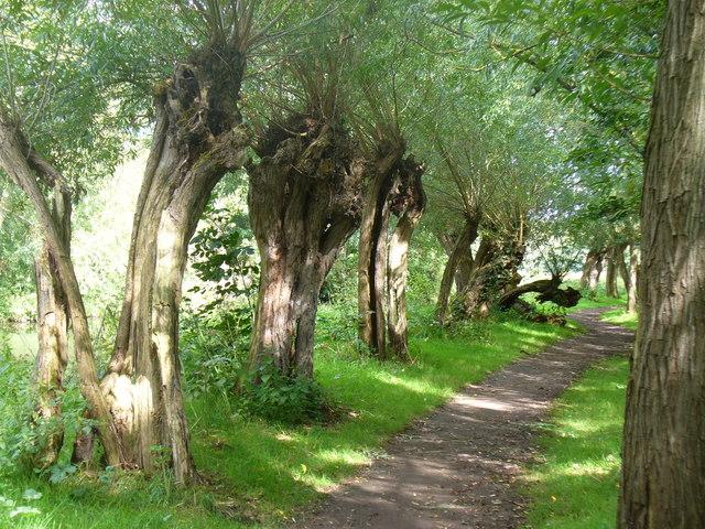 Path Alongside the River Wey Navigation