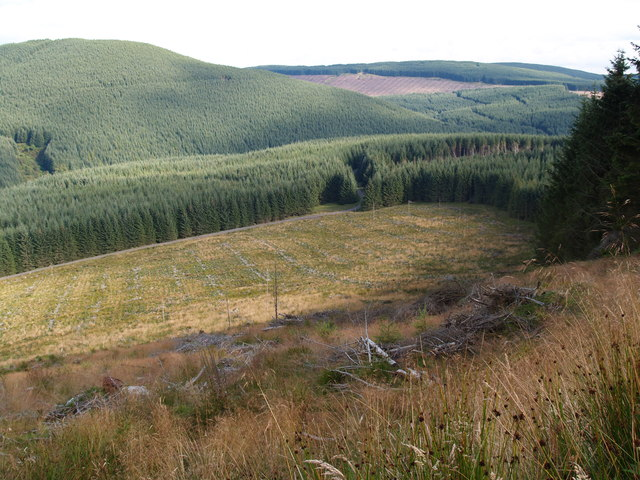 Harvested area in forestry at Greyhound Law