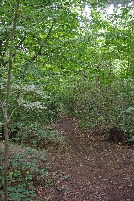 Path Through Hadleigh Great Wood