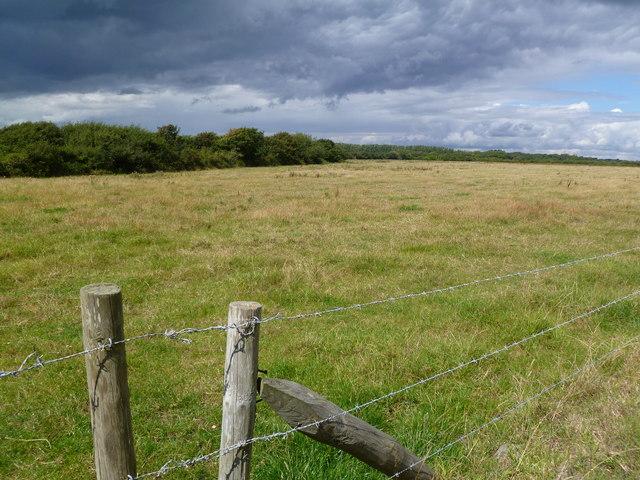 Keyhaven, grassland