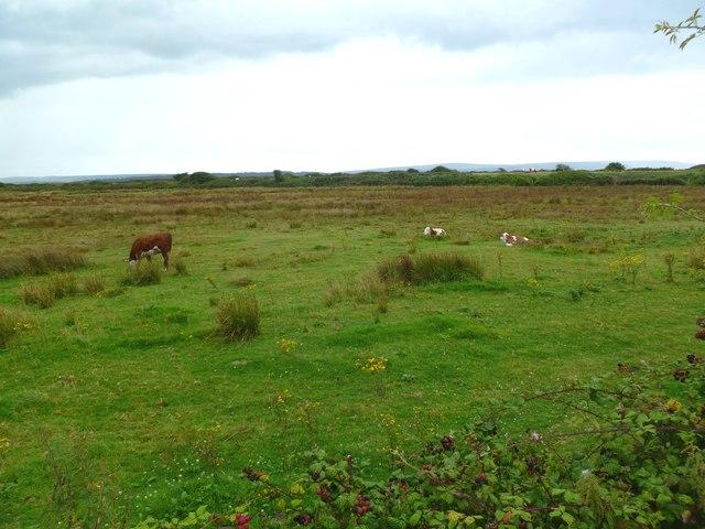 Lower Pennington, grazing land