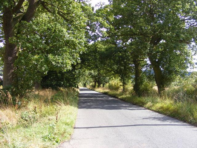 Pedmore Lane