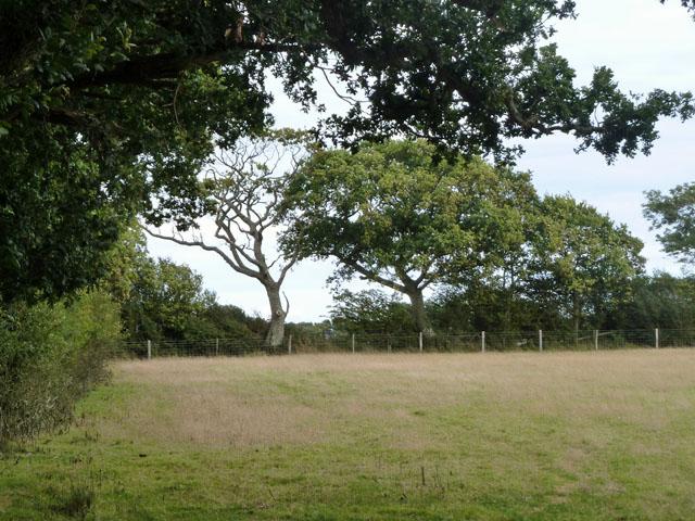 Hedgerow parish boundary