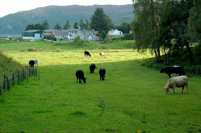 Farmland Near Aviemore