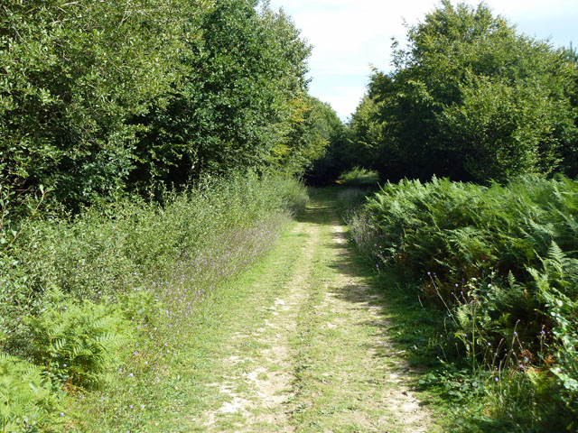 Track in Abbot's Wood