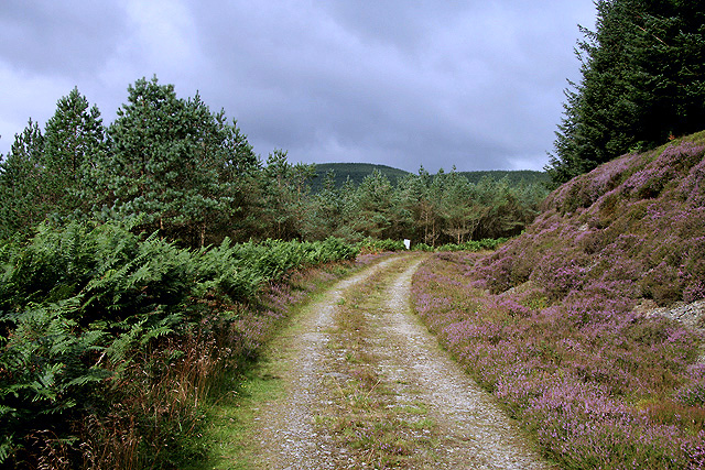 A forestry road on Kirncleuch Fell