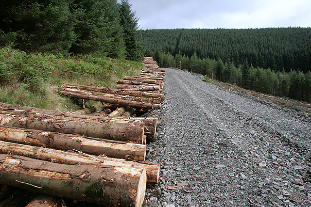 A forestry road at Kirncleuch Fell