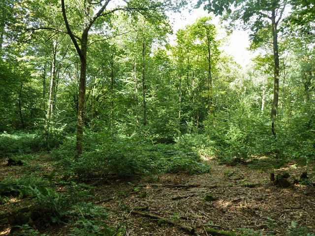Unmanaged area, Abbot's Wood