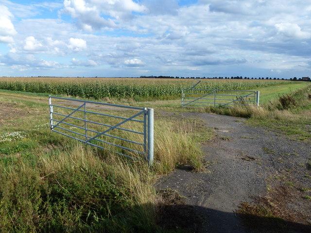 Gated track on Knarr Fen Road, Thorney