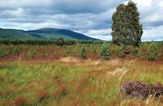Forestry Near Aviemore