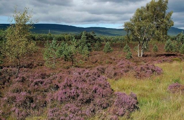 Forestry at Cambusmore