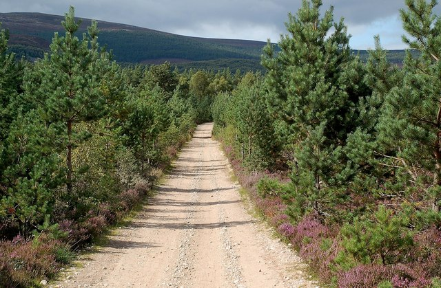 Forest Road at Cambusmore
