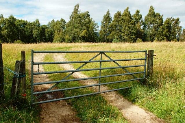Field Near Pityoulish