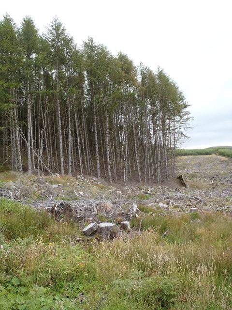 Glentrool Forest