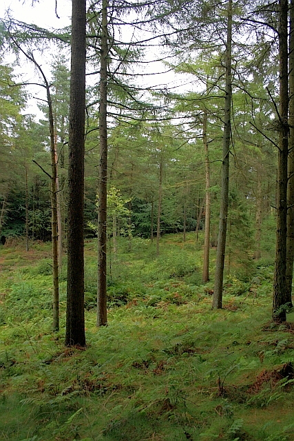 Cloughton Moor Forest