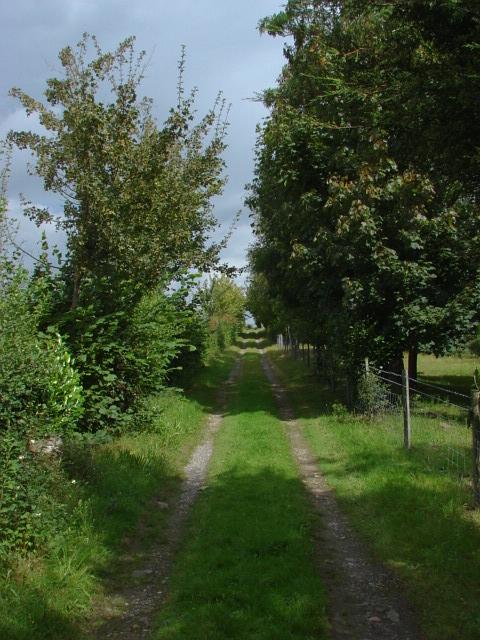 Sutton Green