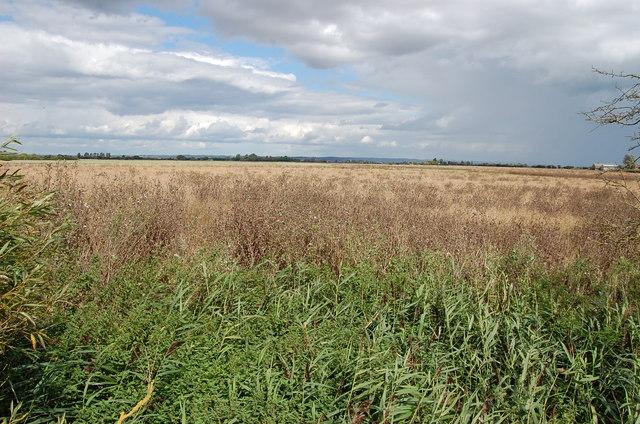 Grassland near Chapel Land Farm