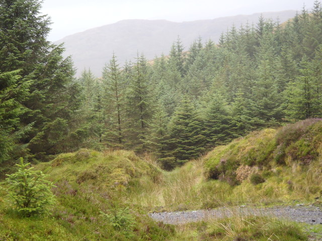 Forest Track in Glentrool Forest
