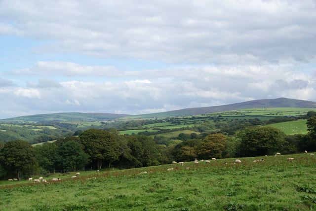Field with sheep at Kilkiffeth