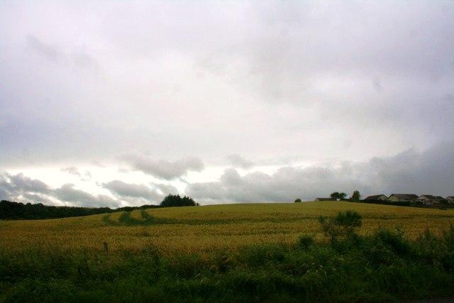 Grain Field by Potterton
