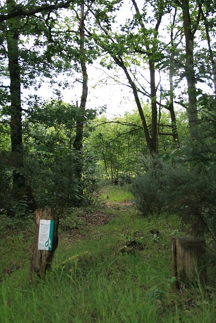Oxshott Heath: path to Heath Road