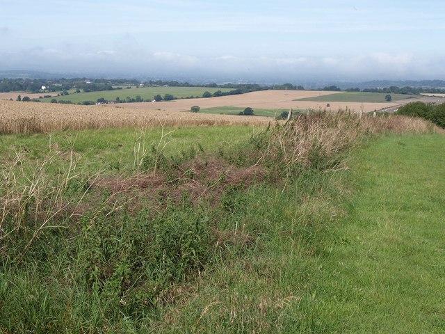 Field boundary, Urchfont Hill