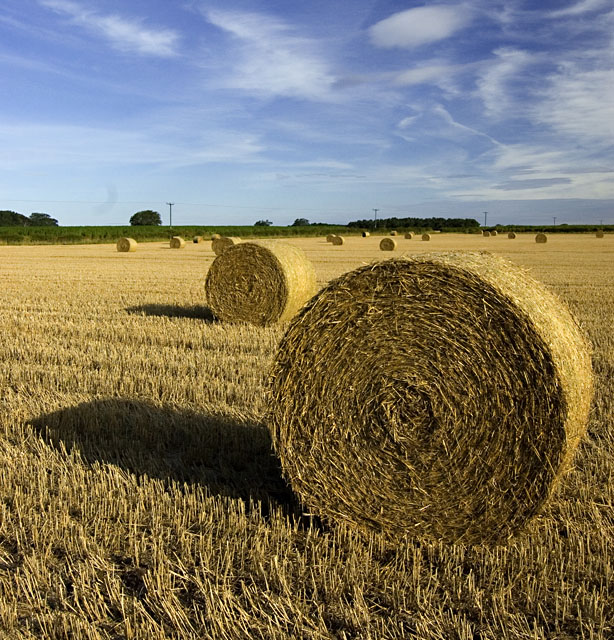 Bales near Bishop Burton