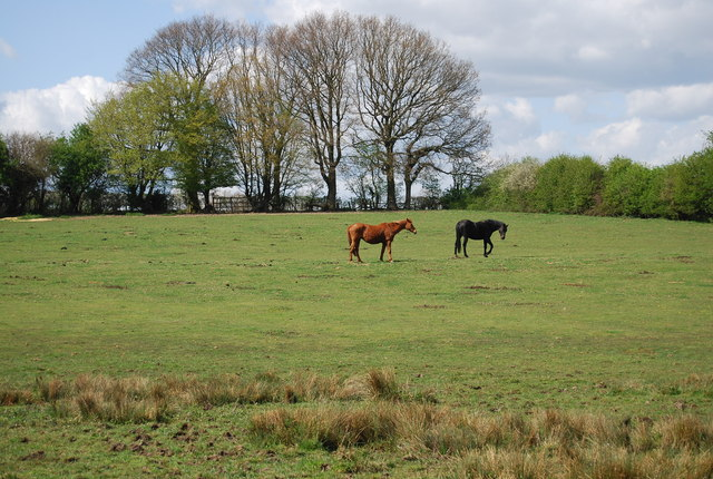 Horses by the 1066 Country Walk