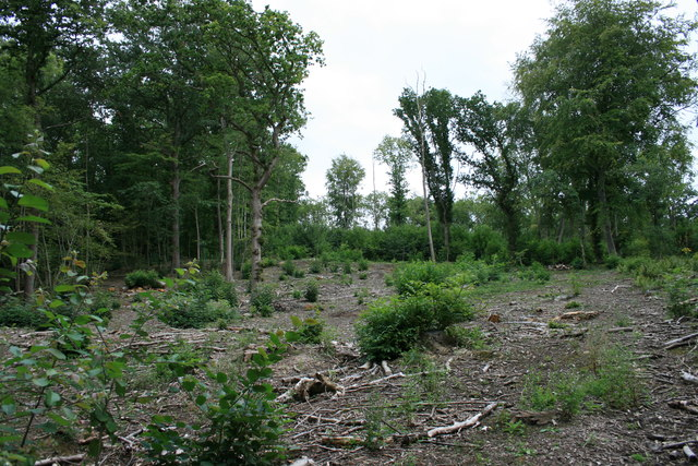 Coppicing in Sixty Acre Wood