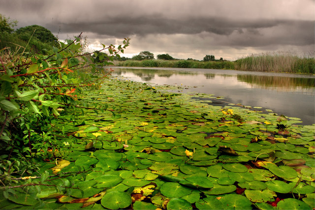 Lancaster Canal - lying in the water