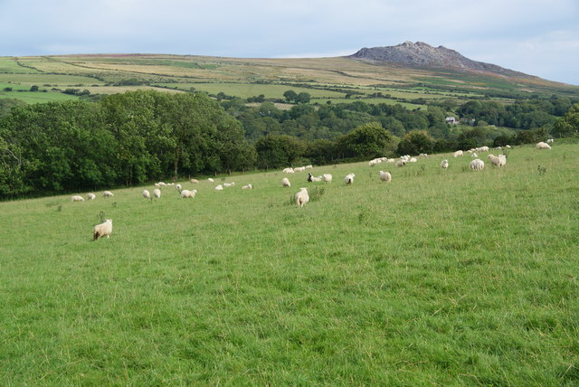 Sheep grazing above the Gwaun Valley
