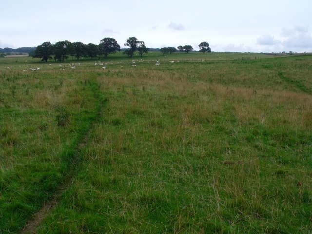 Open grassland south of Abshields Wood near Morpeth