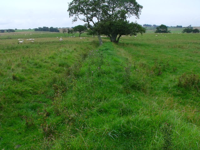Trees on line of old field boundary near Berryhill by Morpeth