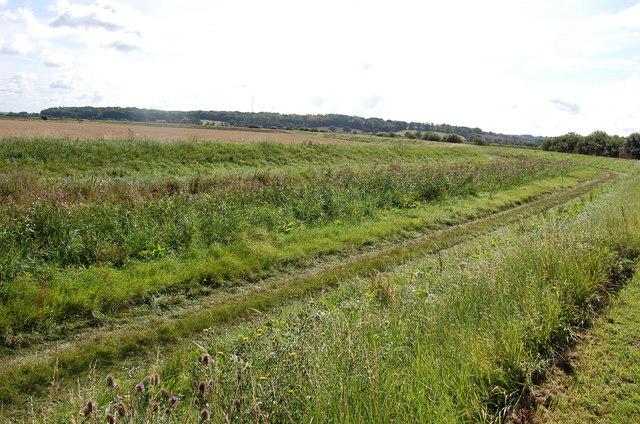 Overgrown Kent Ditch