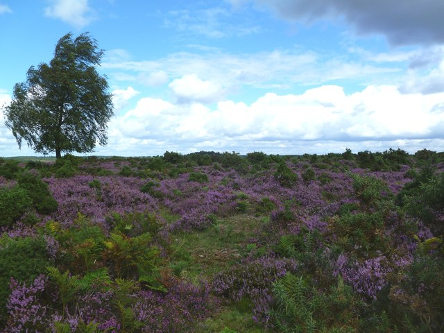 Hampton Ridge, heathland