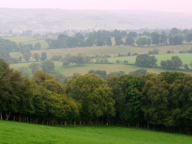 Baal Hill Wood