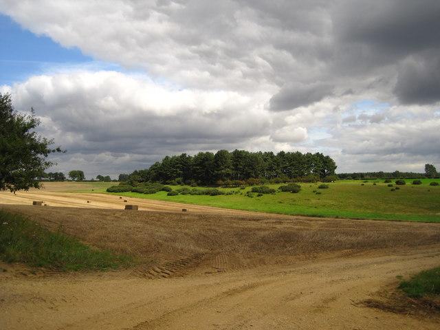 Fields and woodland, Wantisden