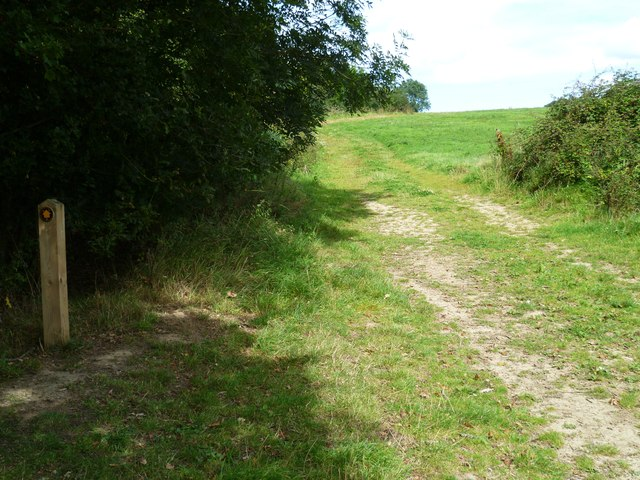 Footpath crosses hedgeline between Knowle Lane and the Downs Link
