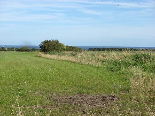 Grassland, Longhoughton