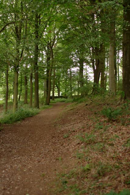 Woodland Path, Fewston Reservoir