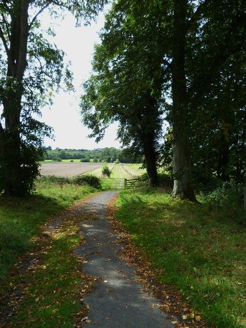 Long straight bridleway to Holdhurst Farm