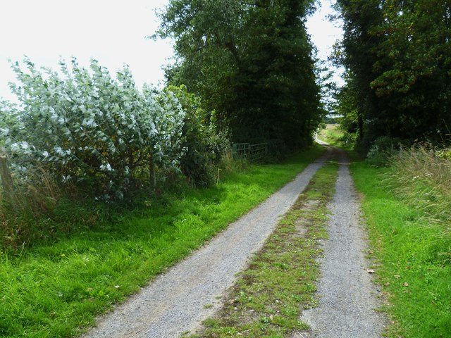 Small clump of trees on bridleway near Holdhurst Farm
