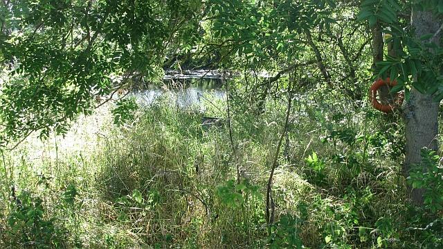 Pond, Stamford