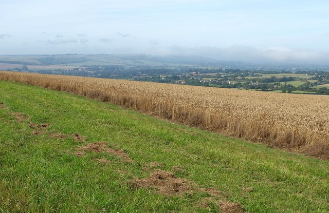 Wheat on the Downs