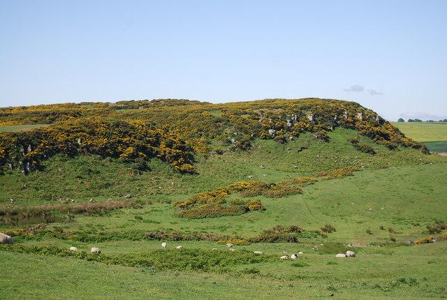Scrog Hill